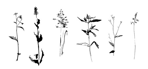 Set of hand drawn weed field herbs. Sketch or doodle style vector illustration of plants. Black image on white background.