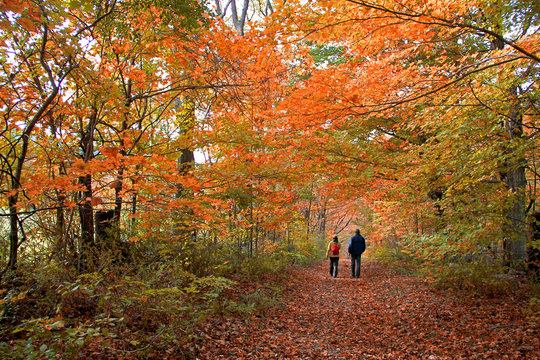 Strolling through the autumn forest in The Berkshires of western Massachusetts
