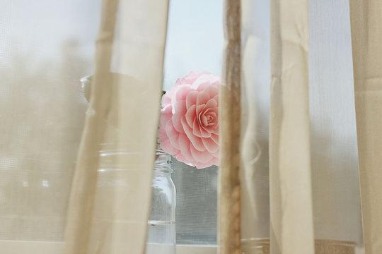 Camelia flower behind curtains
