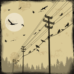 Electricity poles with birds on wire