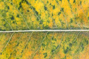 Fall colors. Closeup