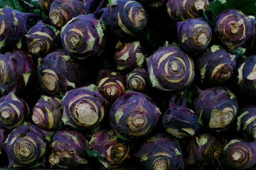 Rows of purple cabbage