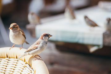 Social sparrow