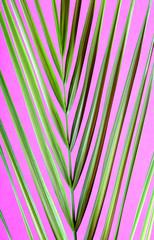 Beautiful palm leaf on  pink