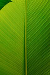 Beautiful Green Leaf Texture