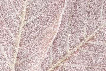 Frost covered maple leaves, closeup