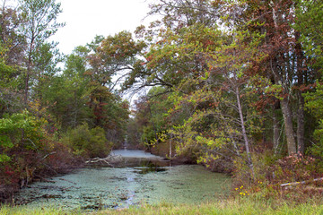 Stream or creek in Necedah National Wildlife Refuge in Wisconsin