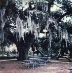 Charleston South Carolina -  Film