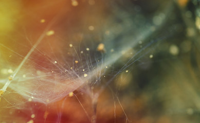 Abstract colors in nature with spider web