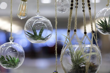 Image of hanging terrarium plants