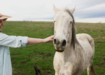 young woman reaches out to pet horse