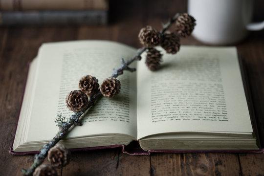 Vintage book with pine cones