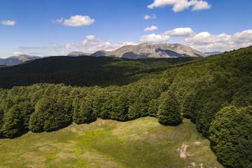 Vista aerea di un bosco in abruzzo