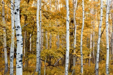 Happy Birch Grove