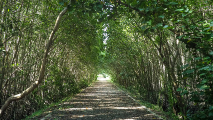 Mangrove forest atmosphere in the morning time at Hua Hin Town, Thailand