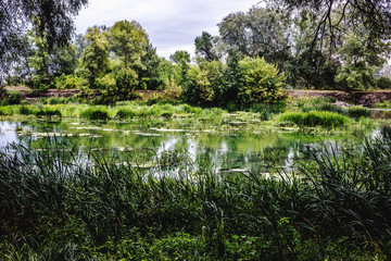 Calm river in the summer morning with green trees on background. Toned, style photo.
