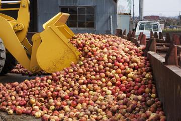 リンゴの廃棄