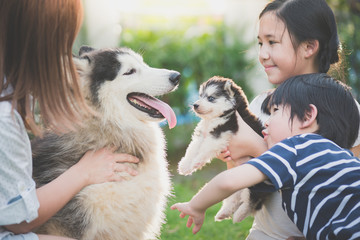 Asian family playing with siberian husky dog