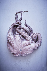 Octopus on gray background