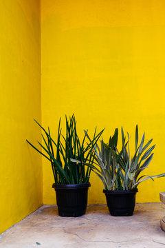 Ornamental plants in garden