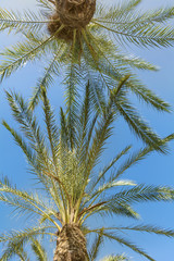 Beautiful tropical background  with palm trees on a blue sky