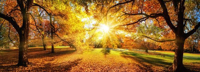 Die Sonne verzaubert die Bäume im Herbst, Panorama in einem schönem Park