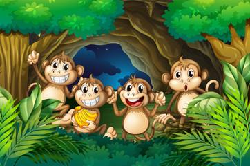 Happy monkeys in deep forest