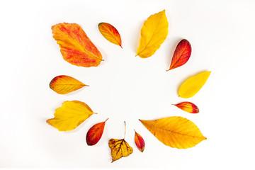 Vibrant autumn leaves forming circular frame on white