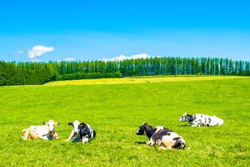 北海道 牧場 牛