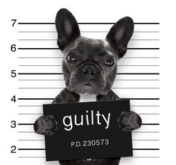 Foto auf Acrylglas Crazy dog mugshot dog at police station
