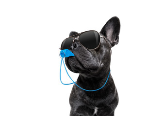 Referee dog with whistle