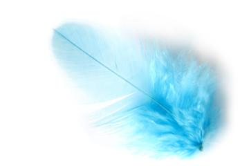 Daunenfeder blau