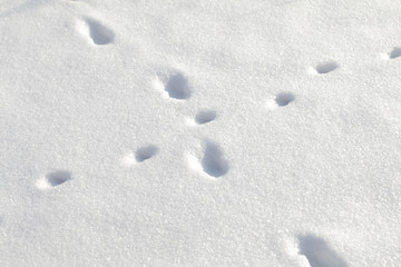 animal tracks on snow
