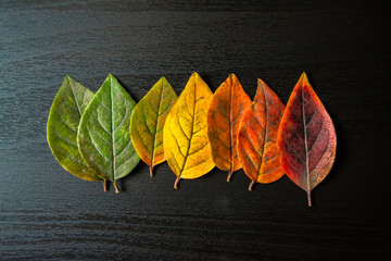 Colorful leaves close-up on a black wooden background