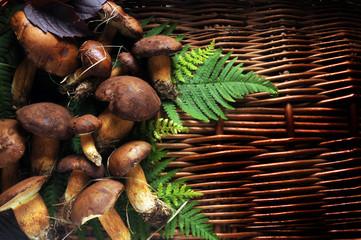 Boletus edulis Sprugnolu Steinpilze Pravé hřiby Hongos Funghi Cèpe Porcini Cogumelo porcino Mushrooms