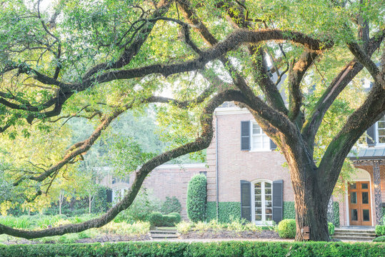 Colonial brick house with huge live oak tree and beautifully landscaped front yard driveway. Shady tree branches with leaves backlit warm morning light.