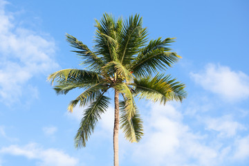Coconut palm under cloudy sky background