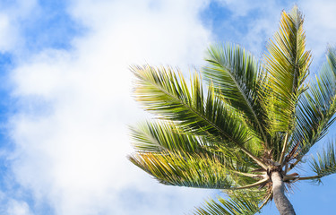 Coconut palm under blue cloudy sky background