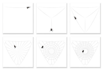 Cob web - building instruction in six steps - watch a busy black spider completing its spiral pattern natural silk artwork. Isolated vector illustration.
