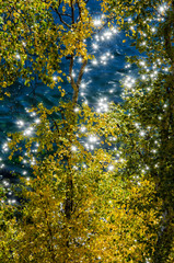 sunlight twinkling and reflecting off lake water and yellow leaves. Background