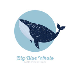 Blue whale illustration. Blue Whale in specks in the blue circle