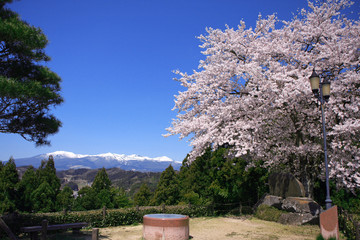 智恵子の杜公園の桜(二本松市)