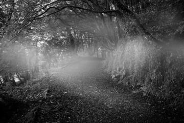 Dark way in the woods
