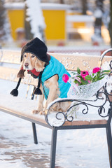 dog with flowers in the snow