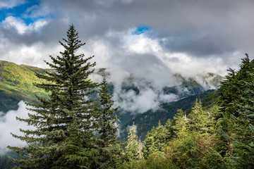 Evergreen trees with cloud covered hills