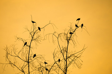 Silhouette tree branches and birds with orange,sunset sky