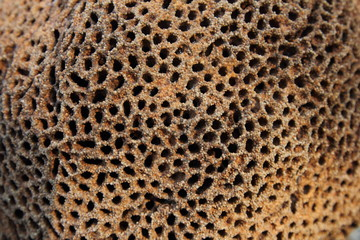 Close-up termite mound