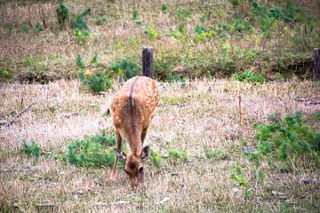 bambi pasturing deer puppy