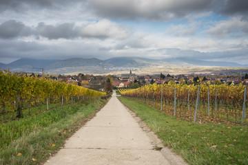 Weinberge in der Pfalz im Herbst