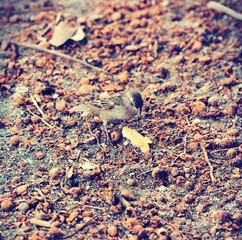 Bird eating in autumn